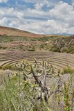 The Incan agricultural terraces. Moray. Sacred Valley. Cusco region. Peru Royalty Free Stock Photos
