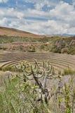Incan rolniczy tarasy murena święta dolina Cusco region Peru zdjęcia royalty free