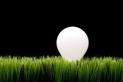 Incandescent bulb on green grass Stock Photography