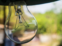 Incandescent Edison type bulbs. With neture background Royalty Free Stock Photo