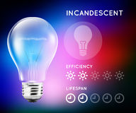 Incandescent halogen light bulb infographic with approximate estimate of energy and efficiency. Stock Images
