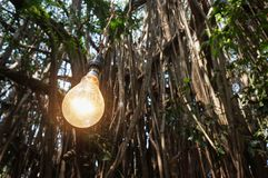 Incandescent lamp on the background of trees stock images