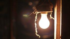 Incandescent light bulb stock footage