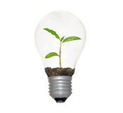 Incandescent light bulb with  planat as filament Royalty Free Stock Photography