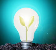 Incandescent light bulb with plant Royalty Free Stock Image