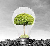 Incandescent light bulb with plant as filament Stock Image