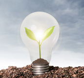 Incandescent light bulb with plant as filament. Incandescent light bulb with plant as the filament Royalty Free Stock Photography
