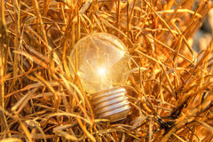 The incandescent light bulb Stock Image