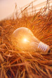 The incandescent light bulb Royalty Free Stock Images