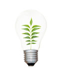 Incandescent light bulb with a tree Royalty Free Stock Photography