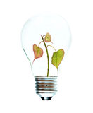Incandescent light bulb with a tree Royalty Free Stock Images