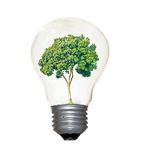 Incandescent light bulb with a tree Stock Photo