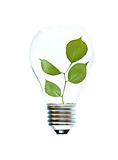 Incandescent light bulb with a tree shoot Stock Photos