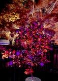 incandescente Imagen de archivo libre de regalías