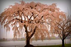 incanto della natura e della pace Fotografia Stock Libera da Diritti