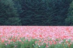 incanto della natura e della pace Immagini Stock