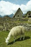 Incas city Machu-Picchu Stock Photo