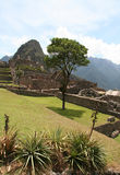 Incas city Machu-Picchu in Peru Stock Photo