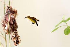 Incastramento dell'uccello Fotografia Stock Libera da Diritti