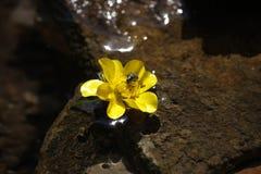 Incect en la flor amarilla Imagen de archivo