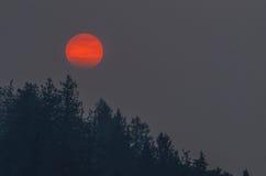 Incendi forestali Fotografie Stock Libere da Diritti