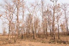 Incendi forestali con gli alberi bruciati Fotografie Stock Libere da Diritti