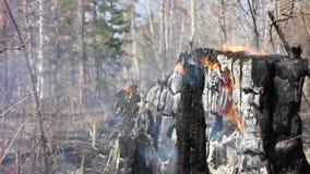 Incendie Brûlé en bas des arbres banque de vidéos