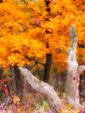 Incendie d'automne Photographie stock libre de droits