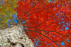 Incendie d'automne Image libre de droits
