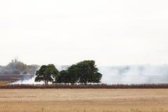 Incendie d'herbe Images libres de droits