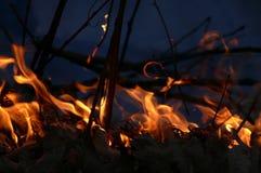 Incendie dans la forêt Image stock