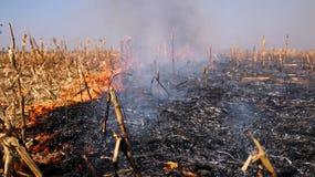 Incendie dans le champ de maïs après moisson Photos stock