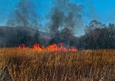Incendie dans une forêt Photos stock