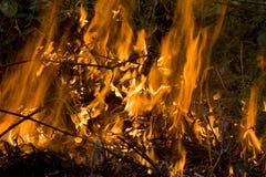 Incendie de Bush Images libres de droits