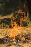 Incendie de camp dans la forêt Photographie stock libre de droits