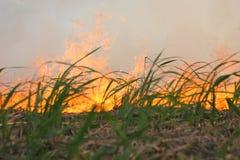 Incendie de canne Image stock