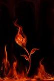 Incendie de fleur Photographie stock