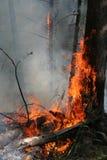 Incendie de forêt Image libre de droits