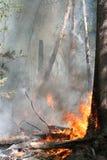 Incendie de forêt Photos stock