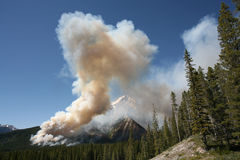 Incendie de forêt Images libres de droits