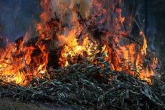 Incendie de forêt photo stock