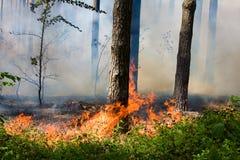 Incendie de forêt Photographie stock libre de droits