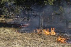 Incendie de forêt Photos libres de droits