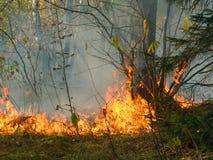 Incendie de forêt. Photo libre de droits