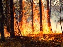 Incendie de forêt. Image libre de droits