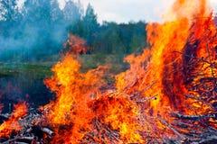 Incendie de forêt Photo libre de droits