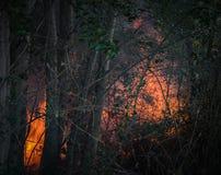Incendie de forêt avec la végétation brûlante et les arbres de hautes flammes au printemps photos stock