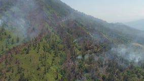 Incendie de forêt dans les montagnes clips vidéos