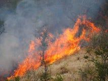 Incendie de forêt de flambage photographie stock libre de droits