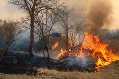 Incendie de forêt sauvage Image libre de droits